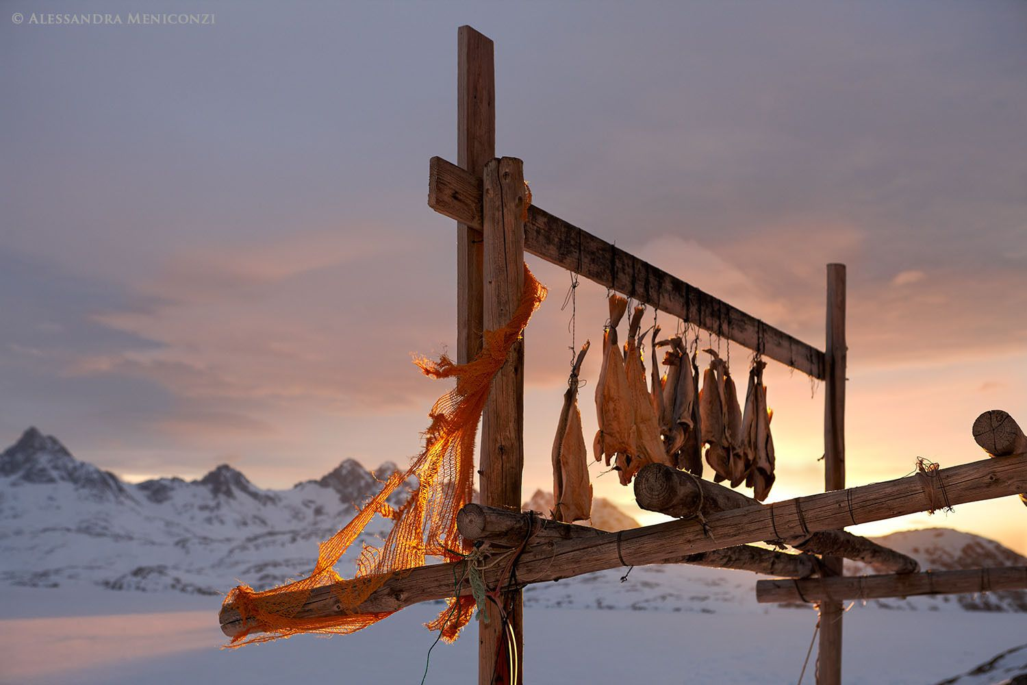 Cod hanging to dry outside an Inuit house in the village of Tasiilaq, southeast Greenland.