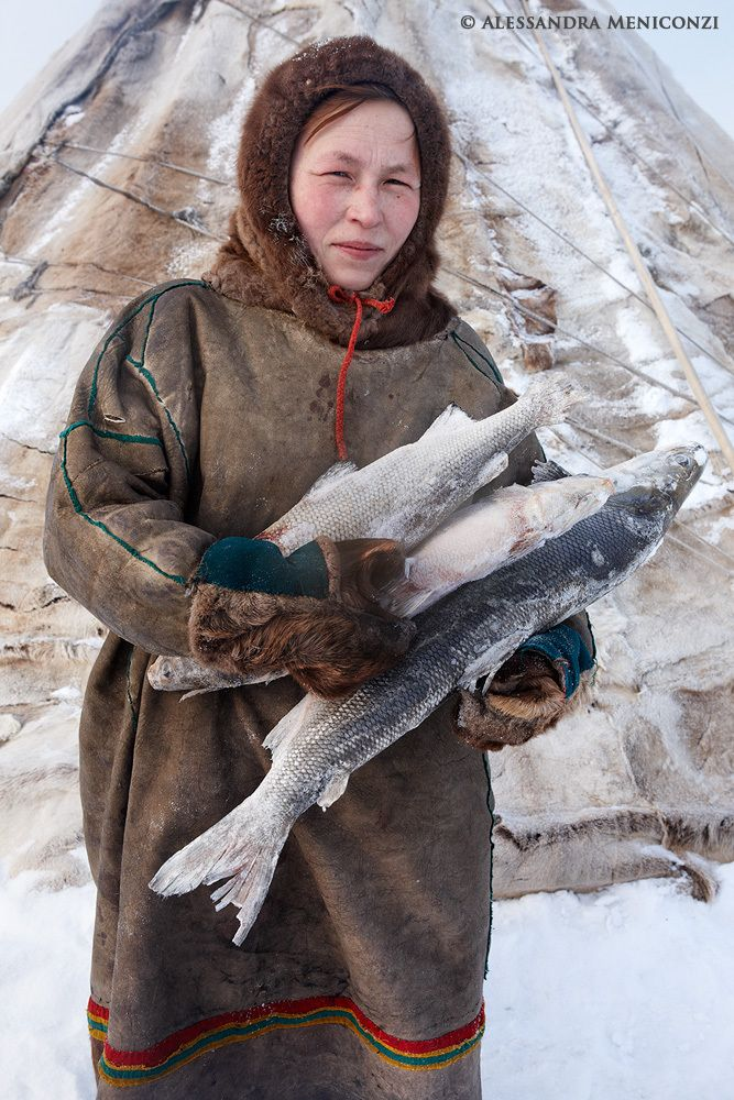 A Nenet woman carries frozen fish into her family's chum to prepare dinner.