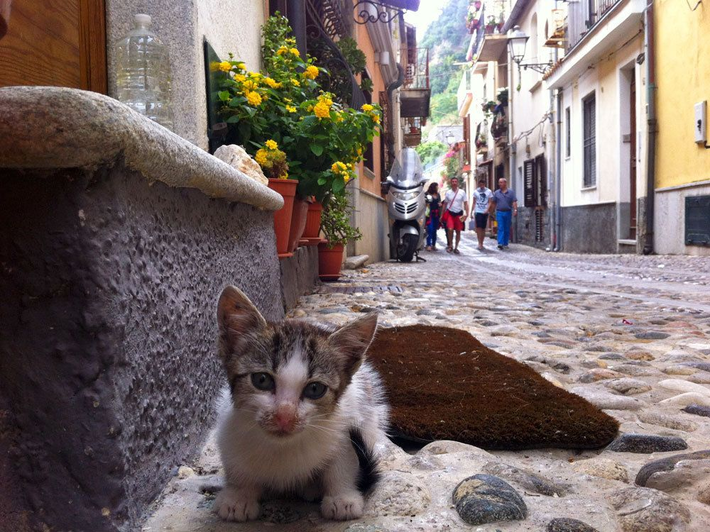 Italian kitten – kittens are cute in avery country of the world