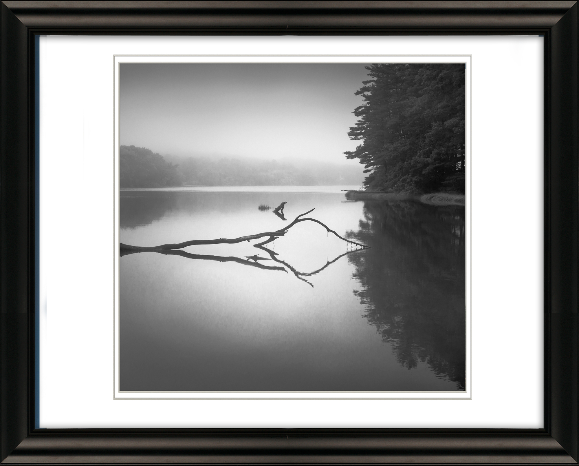 Reflection of Wood in Lake with Fog, Maine