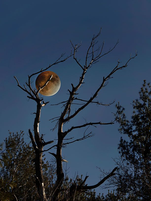Lunar-Eclipse-and-Tree-for-Livebooks.jpg