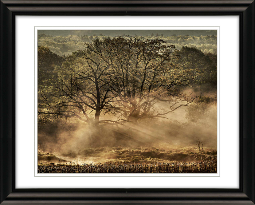 #1893Trees-with-Ground-Fog-Early-Morning-Livebooks-Opt.jpg