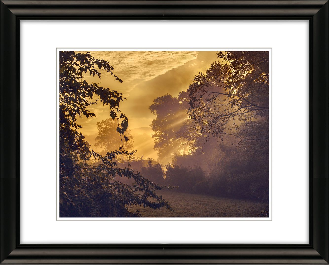 SUNRISE THROUGH TREES  AND PELHAM  HILLS, PIONEER VALLEY