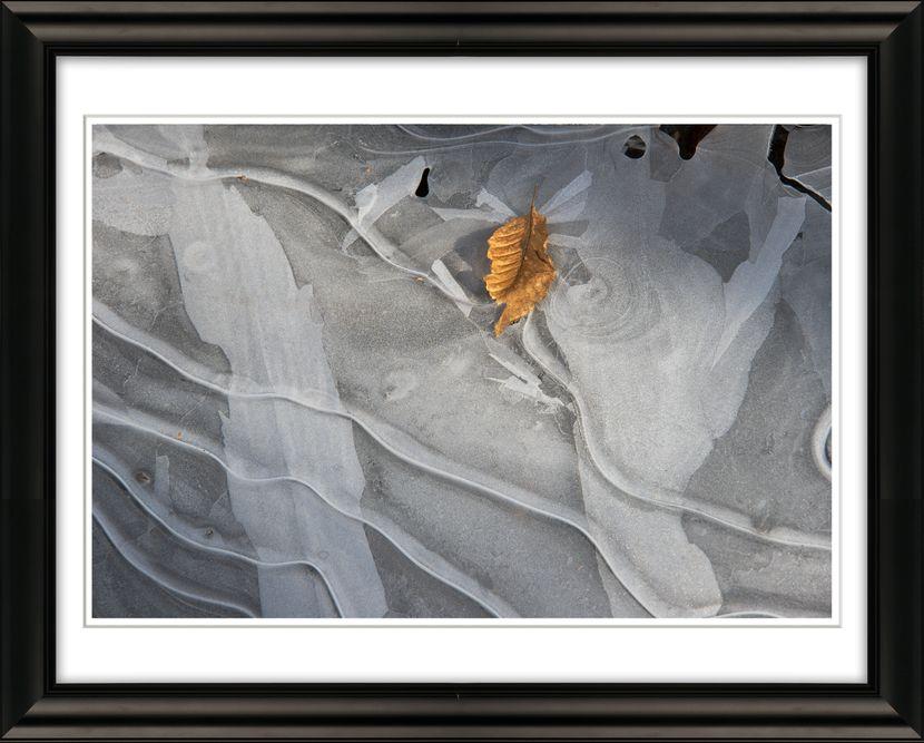 3978 Framed Leaf on Ice Lawrence Swamp Livebooks.jpg
