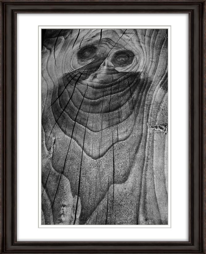 Framed Vineyard image face in wood. Livebooks.jpg