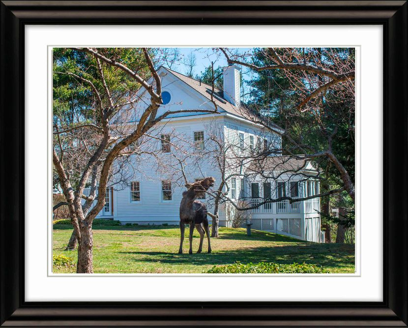 Frame-0969-Moose-and-House-Livebooks-Opt-smaller.jpg