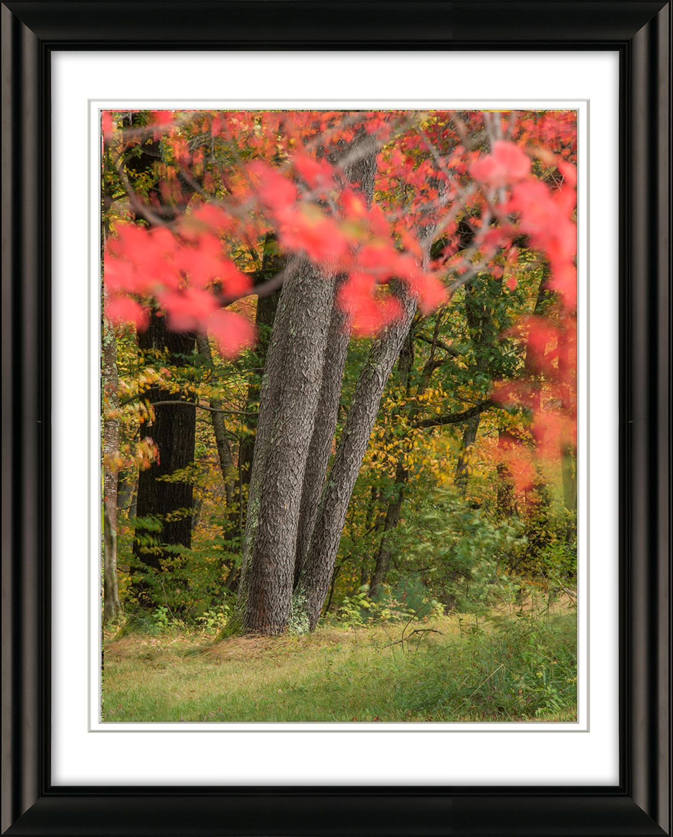 Frame-2993-Red-Leaves-Fall-Groff-Park-Livebooks-Opt.jpg