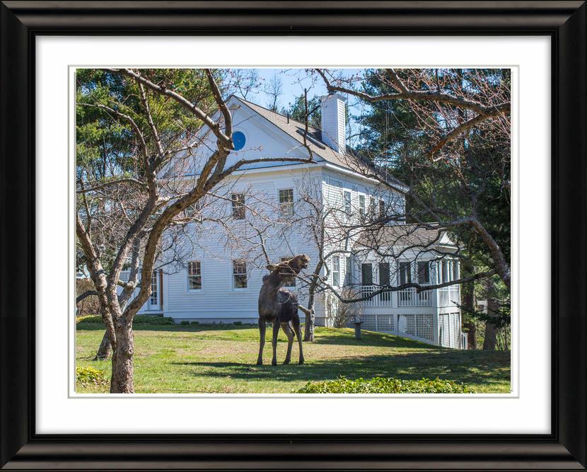 Frame-0969-Moose-and-House-Livebooks-Opt.jpg