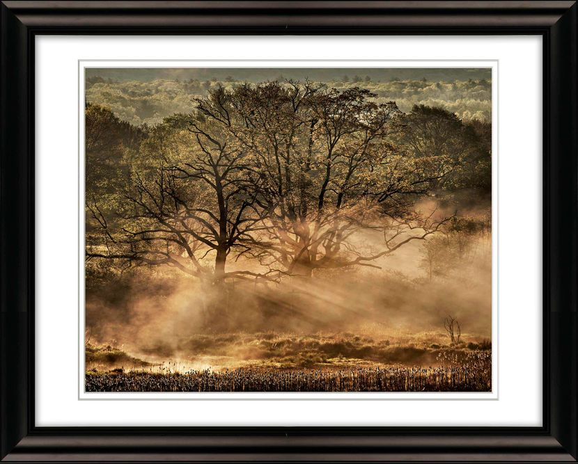 Frame-1893Trees-with-Ground-Fog-Early-Morning-Livebooks-Opt-smaller.jpg