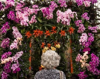 Orchidshow_wall-400x317.jpg
