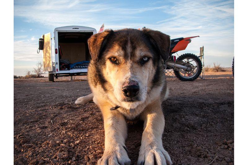 Dog in desert by John Wagner Photography