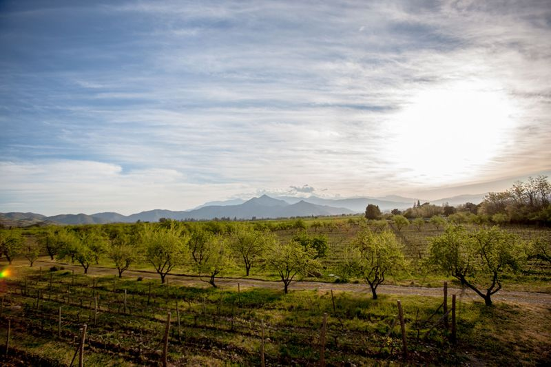 Biodynamic Vineyard, Chile Photographed by John Wagner Photography