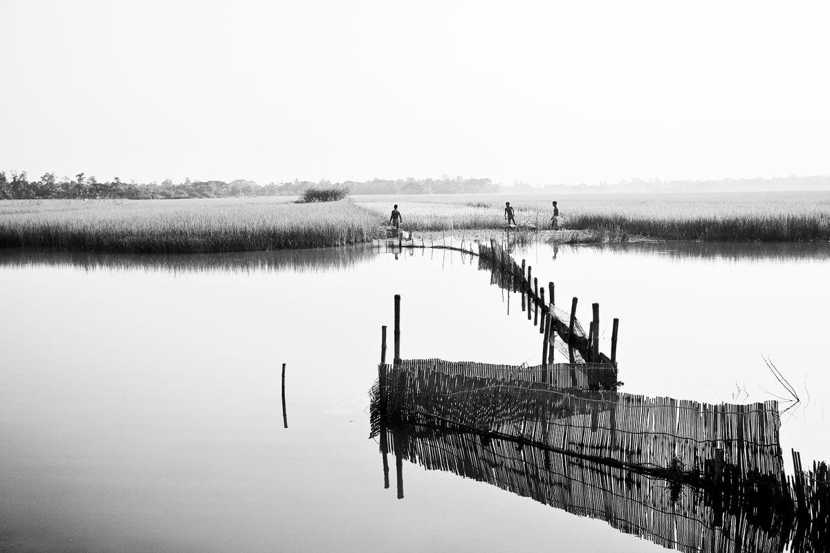 Sundarbans4.jpg