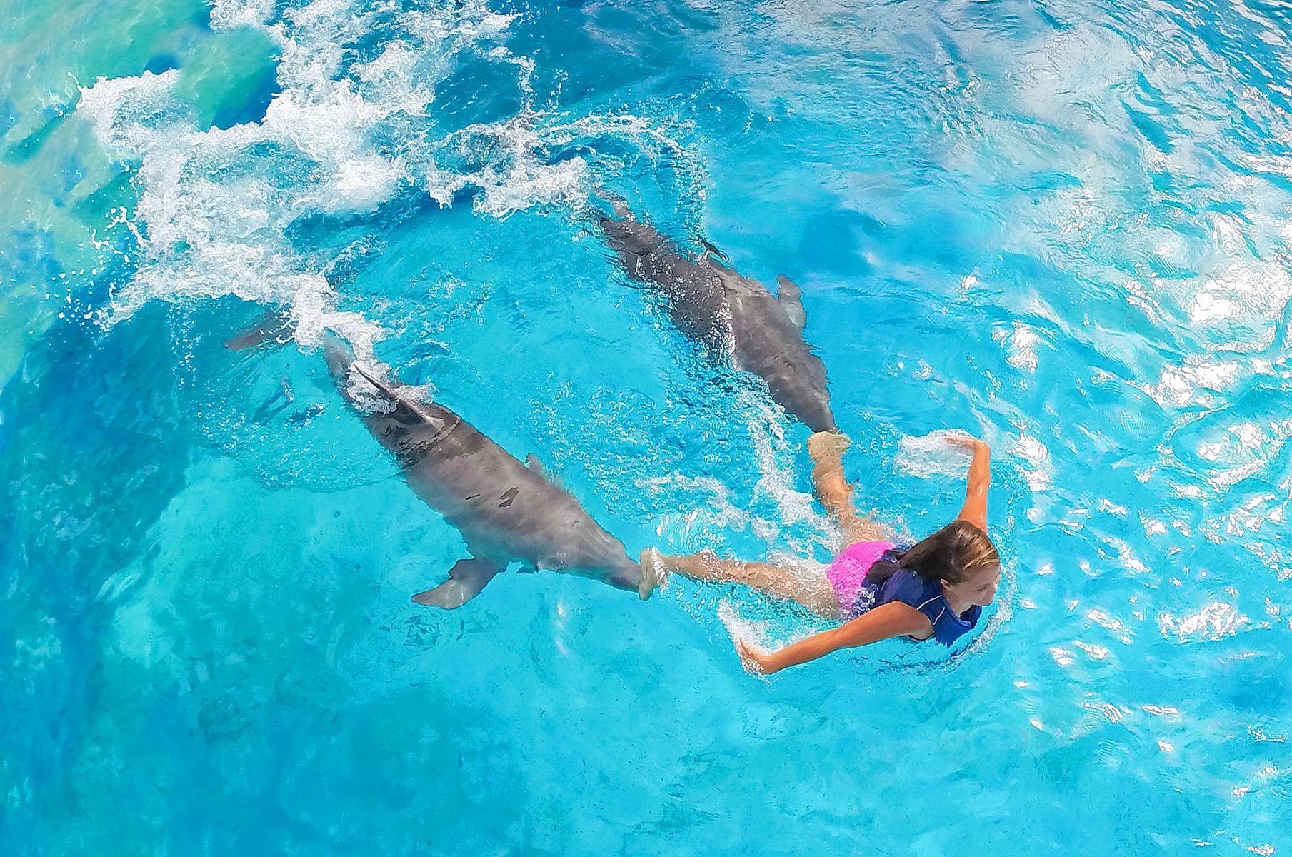Dallas Commercial Photography  - Dolphin Rides