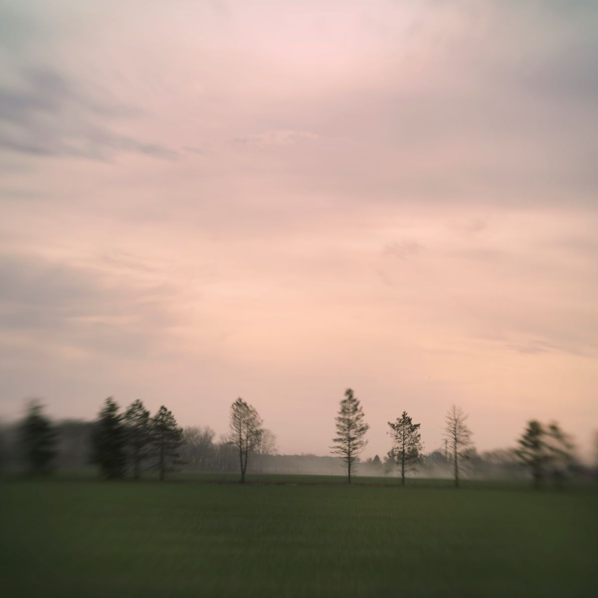 foggy trees.jpg