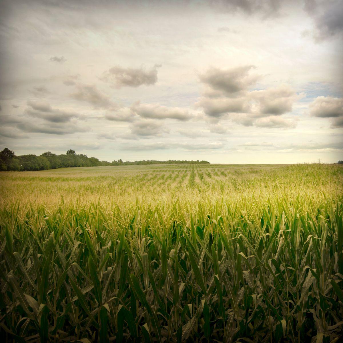 field sky.jpg