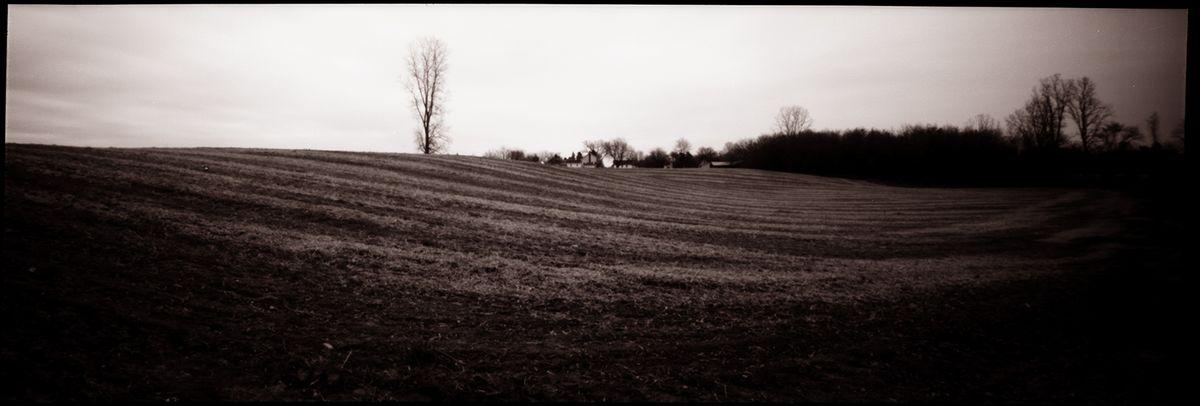 Land Tree-s.jpg