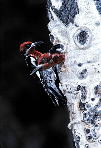 11-Bird20100828_0008.jpg