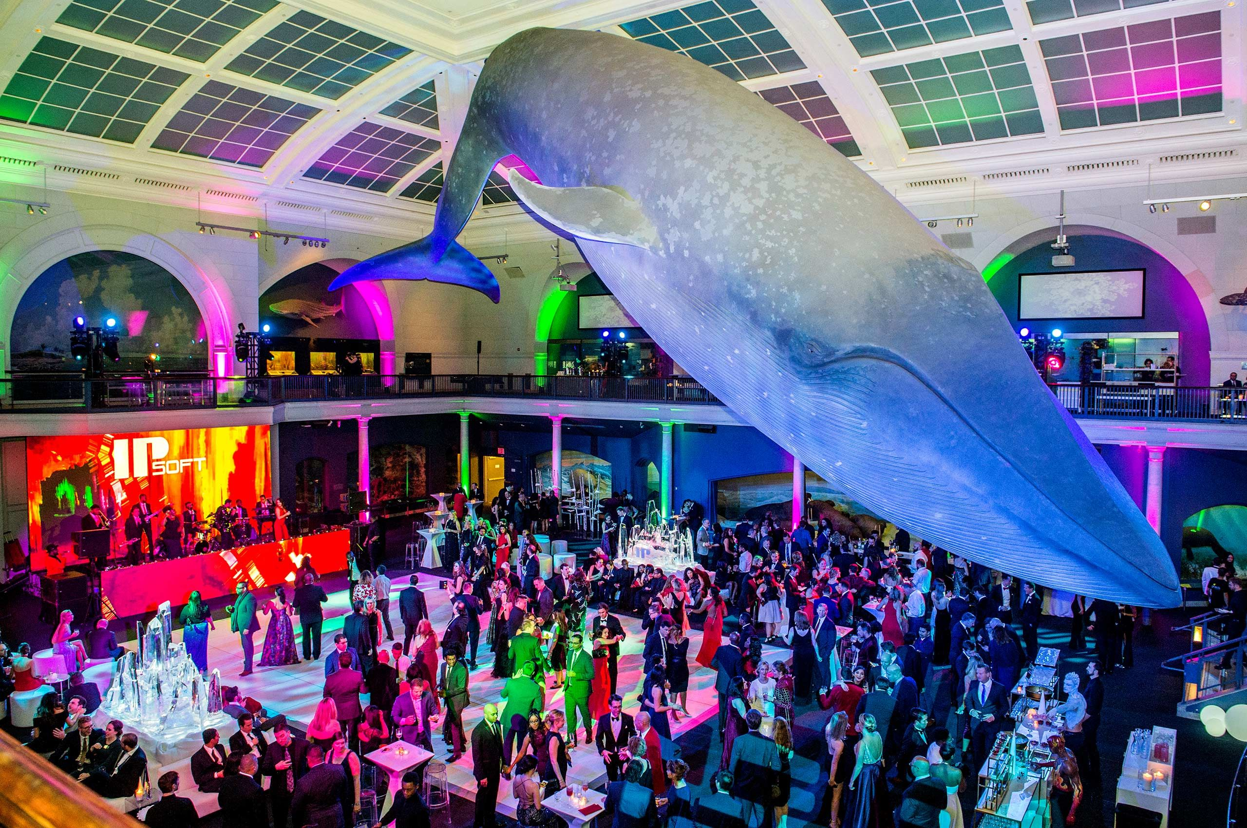 Corporate photography of IPSoft's annual holiday party at the Musuem of Natural History (AMNH)