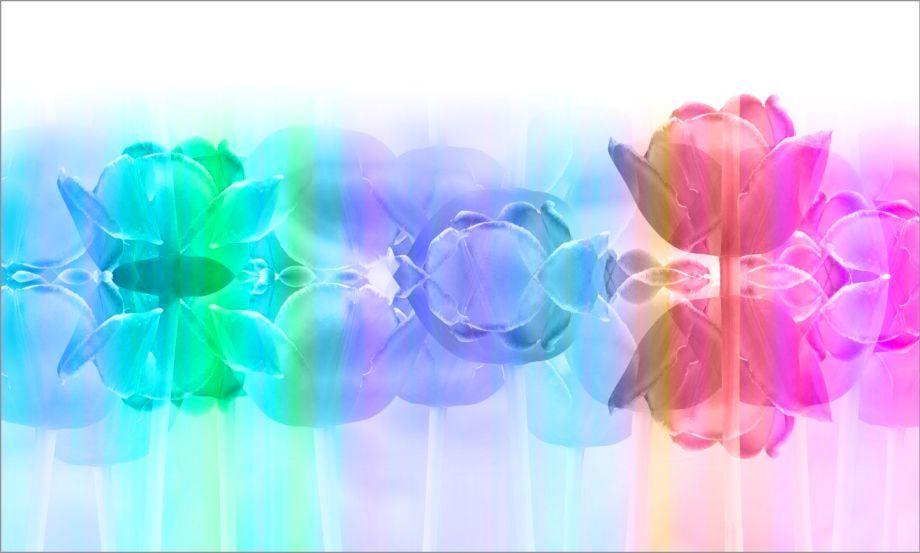 4_0_368_1rainbow_tulip_garden_.jpg