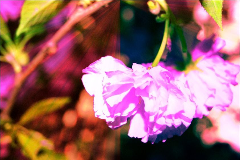 2_0_323_1multi_hanging_flower_2.jpg