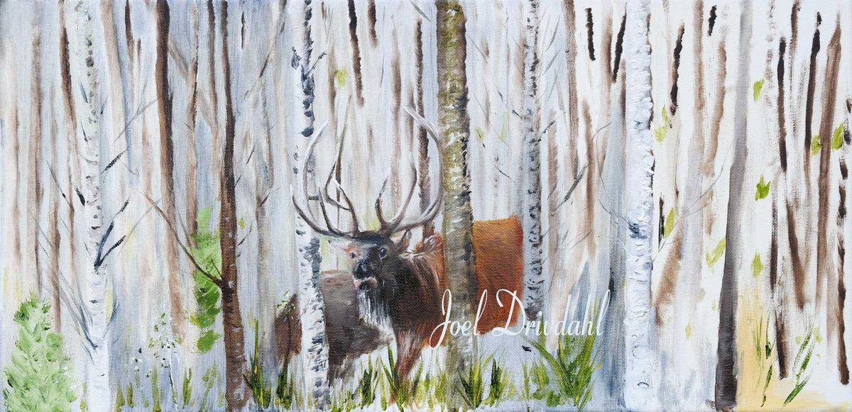 Elk-in-the-Birch-edit-web.jpg