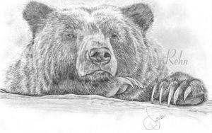 bear-8.jpg-web.jpg