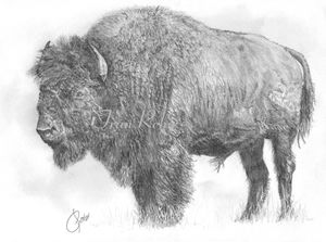 2-buffalo-backround-off--5.jpg