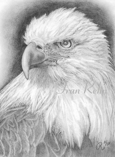 eagle-(3)-cropped-watermark-web.jpg