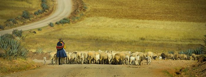 Shepherd / Urabamba valley of Peru