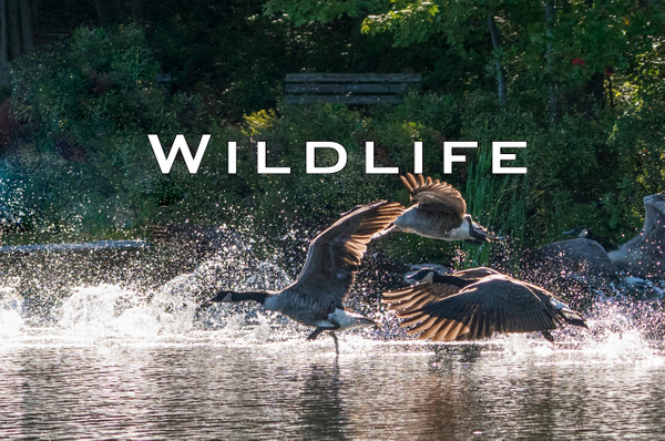 Wildlife-1183.jpg