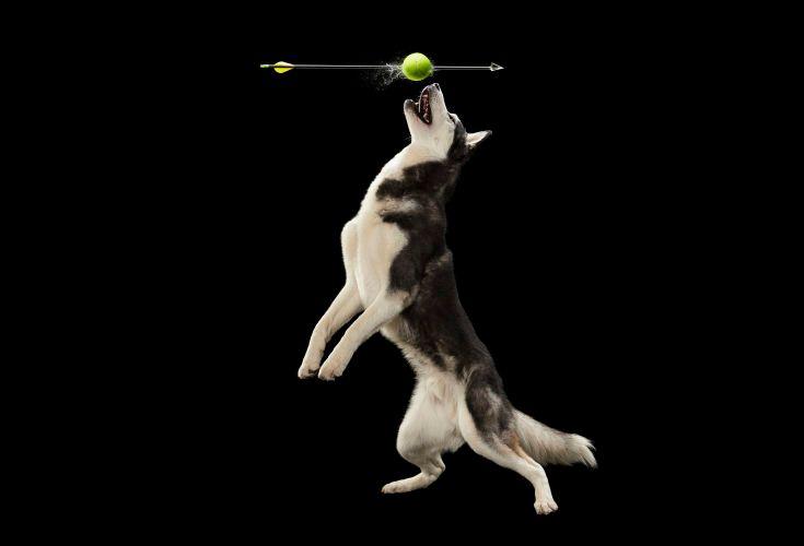 1dog_and_ball4205