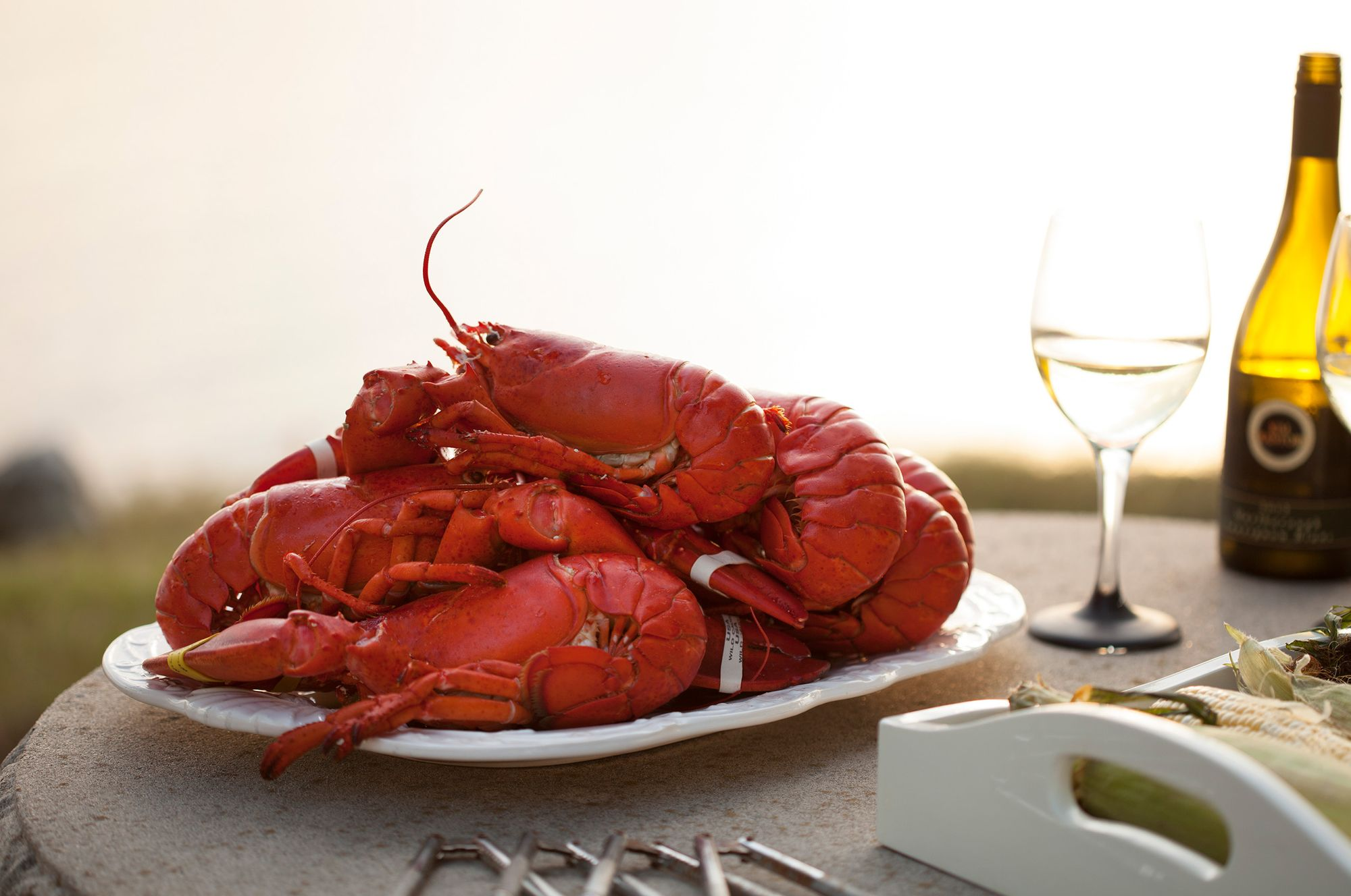 Lobster dinner with white wine.jpg