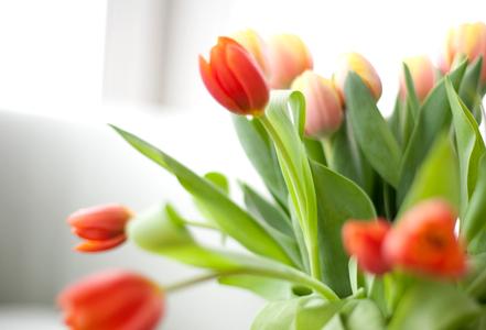 Tulip Detail.jpg