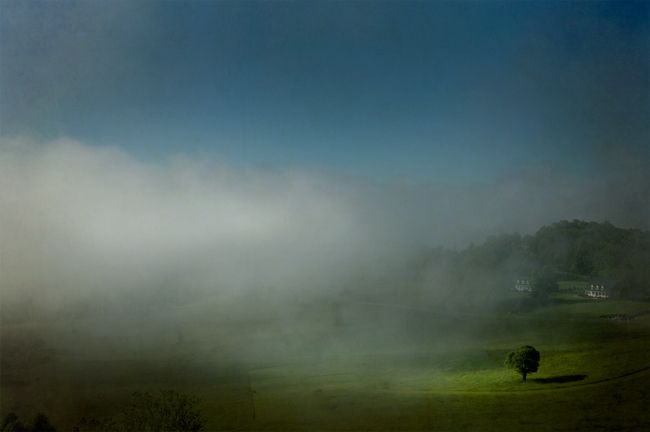 Tree-in-Fog1.jpg