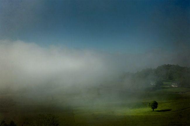 Tree-in-Fog1.jpg
