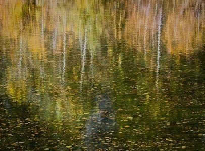 Yosemite GoldMerced River, Yosemite, California