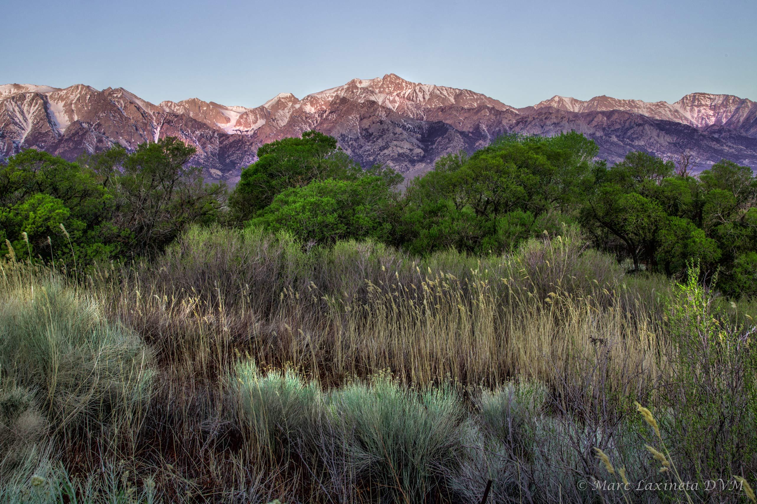 Up Moffett Ranch Road
