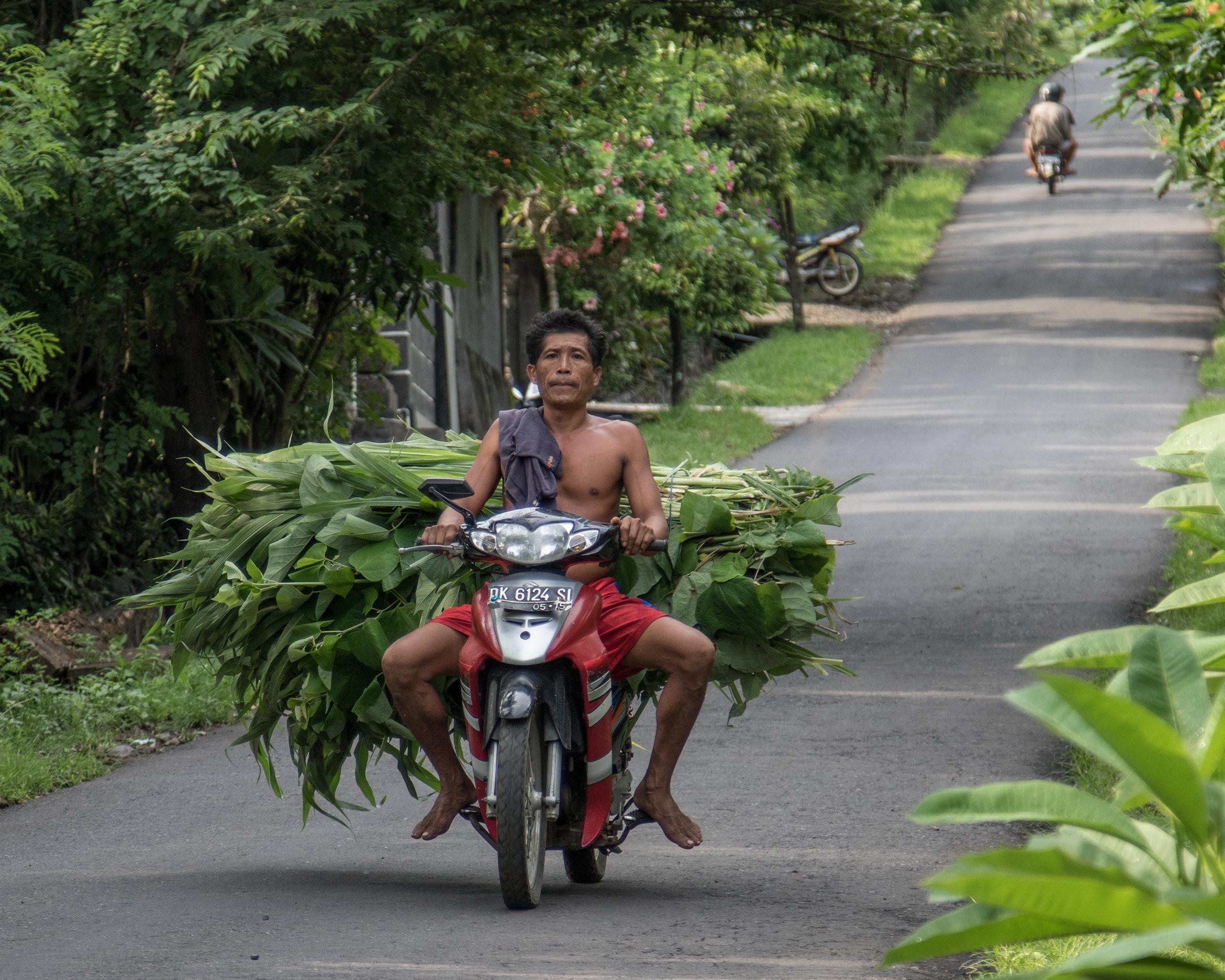 BaliBikerGrass.jpg