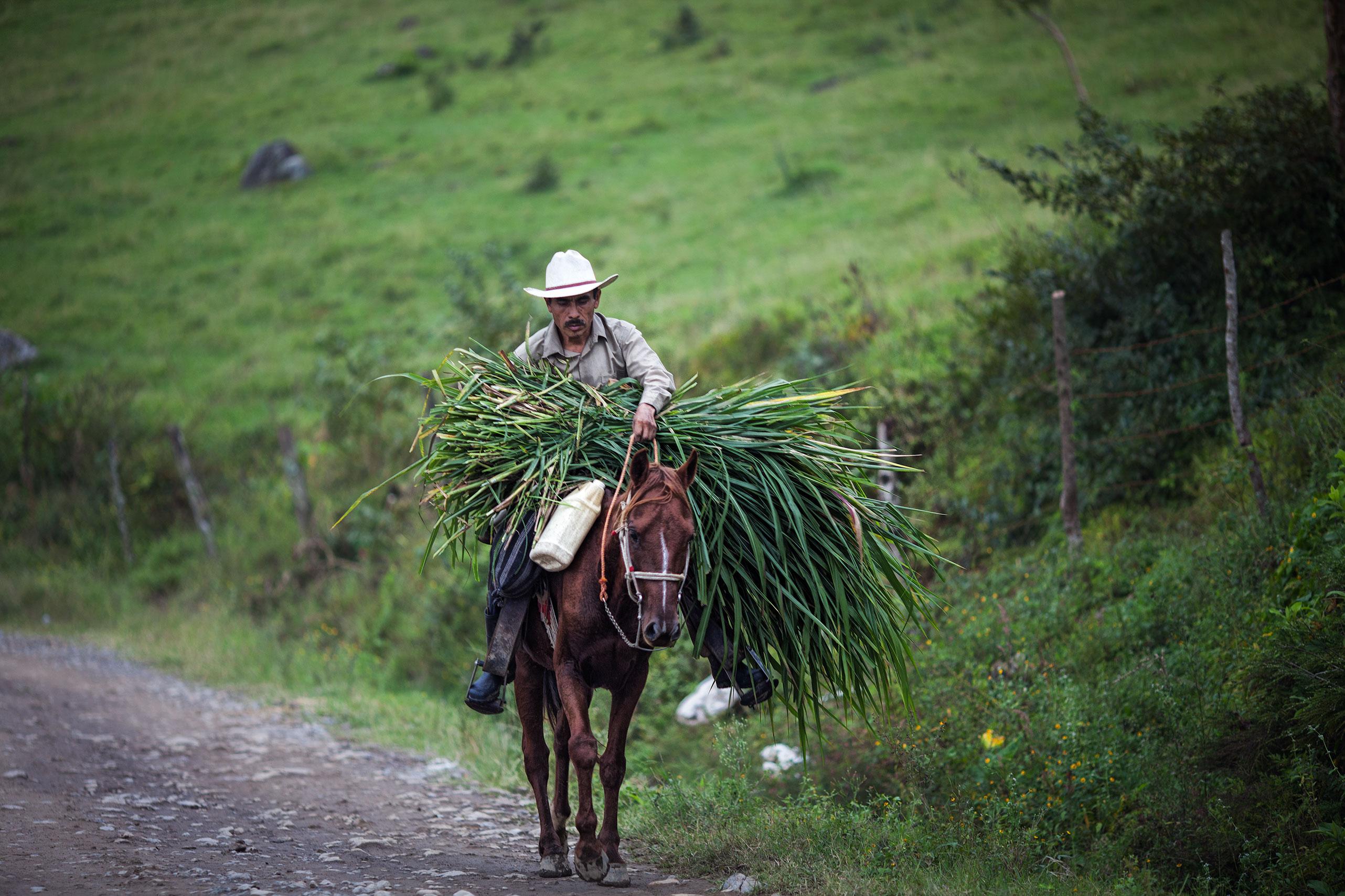 MexicanHayhauler.jpg