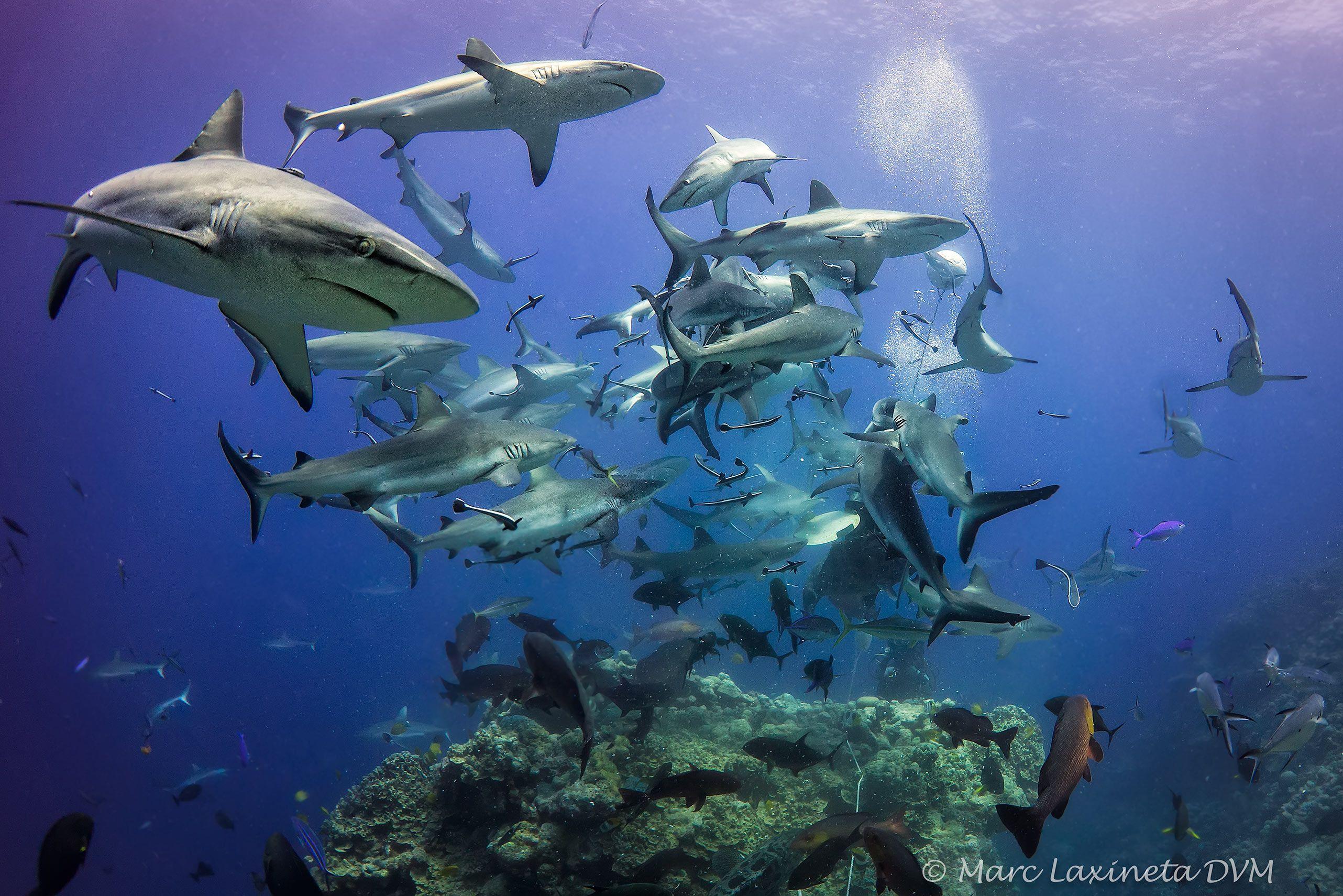 SharkFeedAussie.jpg
