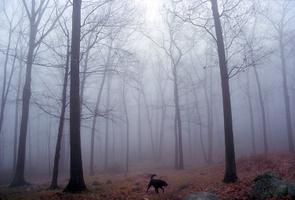 Rain Running in the Woods