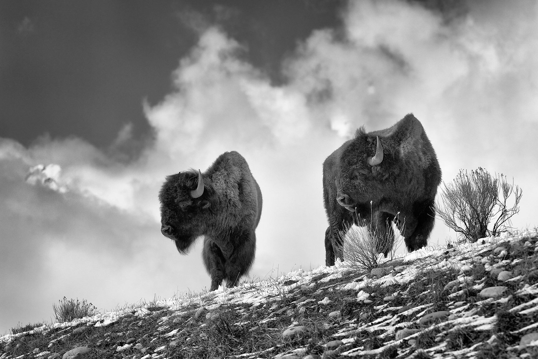 Bison Ridge_03