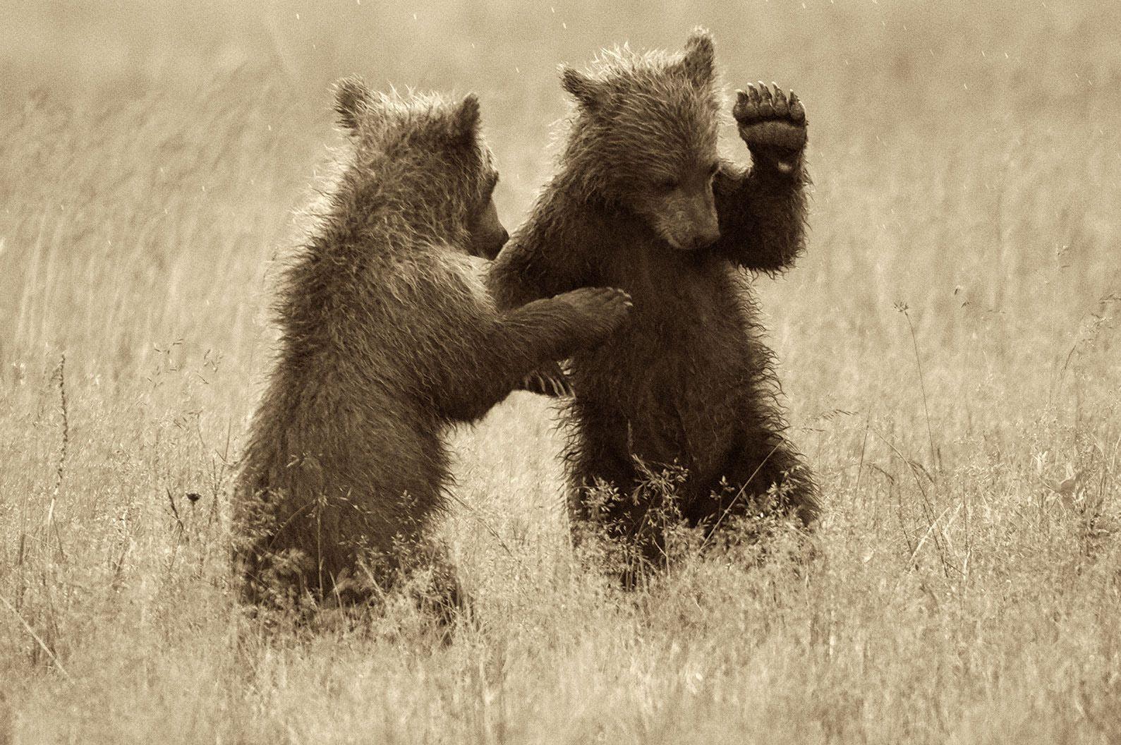 GRIZZLY-BEAR-CUBS-01-.jpg
