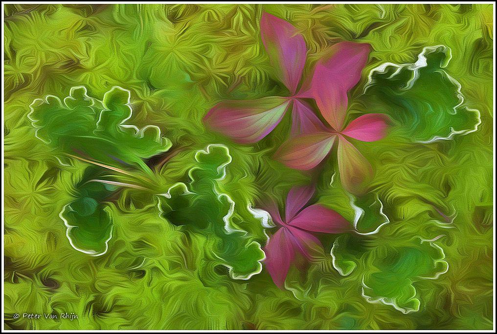 Bunchberry and Leaf Lichen