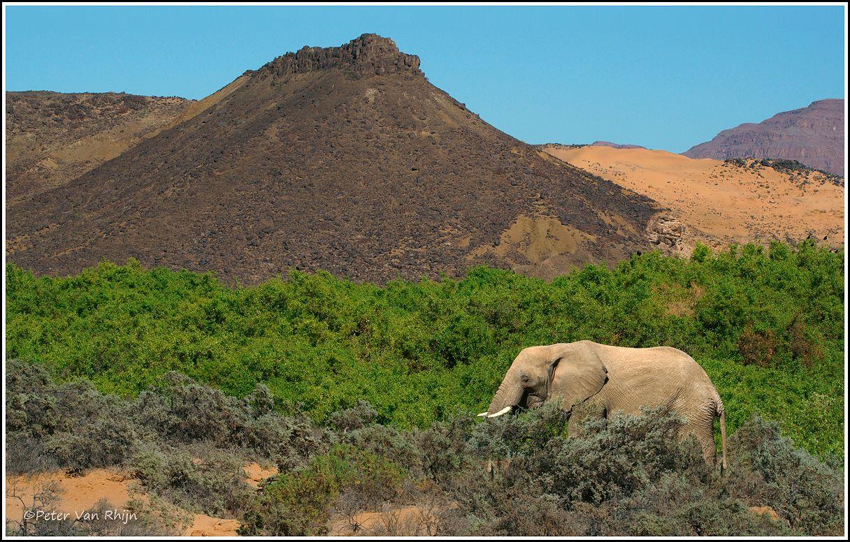 Behaved Elephant