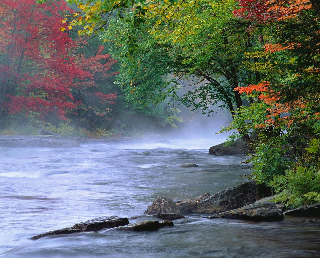 Oxtongue River Autumn