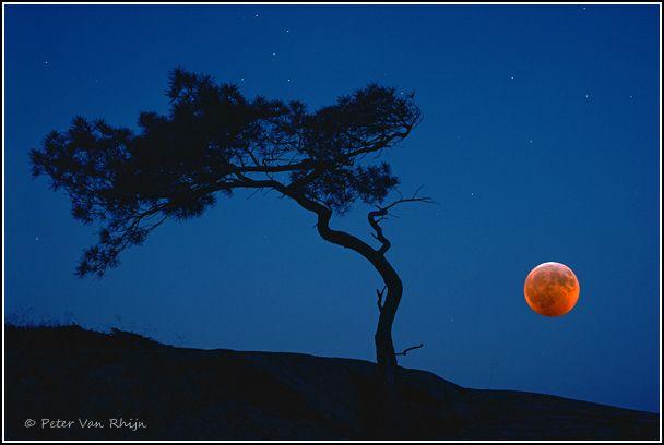 Blood Moon in Georgian Bay