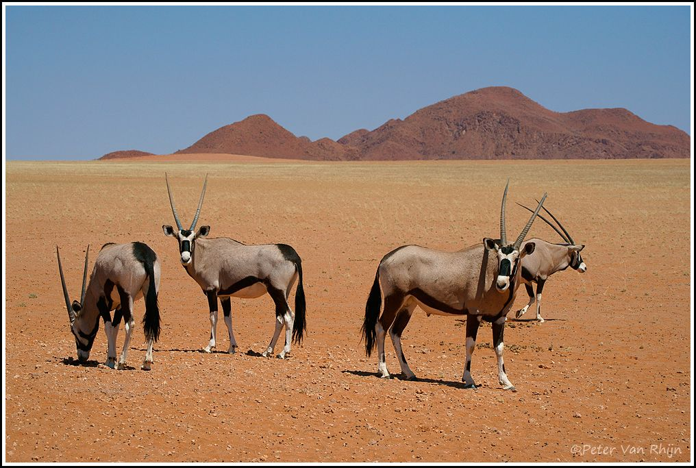 Gemsbok Group