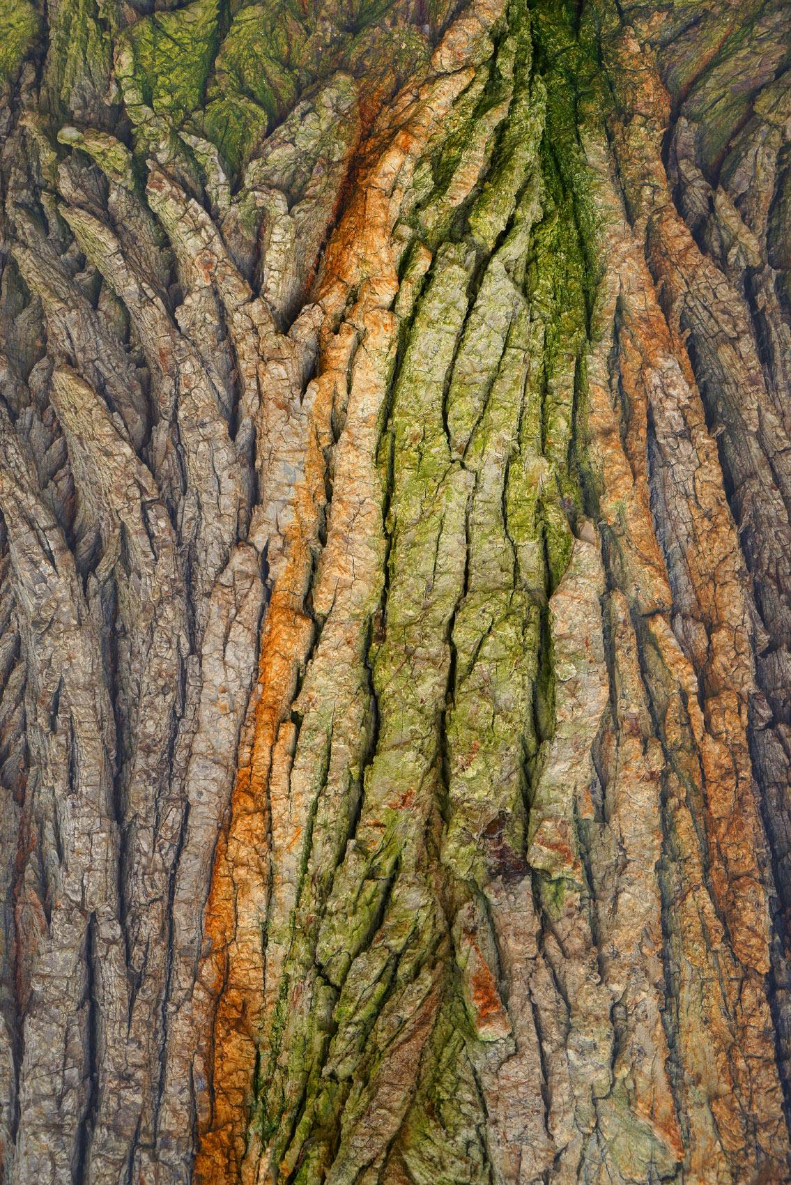 Tree Bark Enhanced